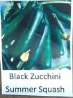 Black Zucchini Summer Squash Seed, Garden Seed (30 OR 300 Seeds Per Packet)