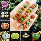 10PCs/Bag Lithops Cactus Succulent Seeds Bonsai Potted Plant Home Garden Decor