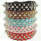 Leather Rivets Spiked Studded Dog Collar Puppy Collar 5 Colours 4 Sizes XS S M L