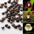 Внешний вид - A24A Gross Weight: 5g Monkey Face Plantdecor Virgem Bonsaipot Flower