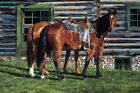 176030 HORSE Curly and the Kid by Ann Hanson Western Decor WALL PRINT POSTER DE
