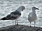 Seagulls Photo Photograph Greeting Card Sea Beach Norfolk Birds