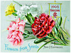 Carnations Flowers Seed Packet Quilt Block Multi Szs FrEE ShiP WoRld WiDE (916A