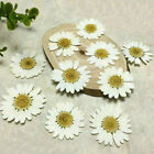 12Pcs Chrysanthemum Pressed Dried Flowers For Art Craft Resin Jewelry Making DIY