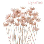 30pcs Daisy Craft Dried Mini Flowers Decorative DIY Small Star Flower Bouquet`