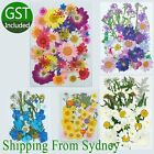 6 Type Real Dried Flowers Pressed Leaves For Epoxy Resin Jewelry Making Diy Au