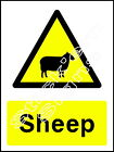 Sheep - COUN0009 Stickers & Signs