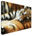 LARGE Tiger Cub Sleep Canvas Wall Art Pictures For Home Interiors