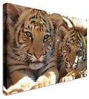 LARGE Tiger Cub Chill Canvas Wall Art Pictures For Home Interiors