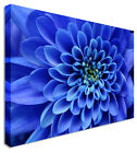 Close Up Aster Blue Flower - Canvas Wall Art Pictures For Home Interiors