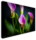 Large Lily Purple Calas - Floral Flower Canvas Wall Art Picture
