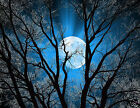 Abstract Blue Sky Tree Moon Wall Art Home Decor Picture