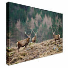 Scottish Stag Pack - Scotland Canvas Art Cheap Wall Print Home Interior