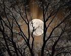Brown Wall Art/Tree Moon/Bedroom Home Decor Matted Picture