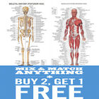 A2 A3 A4 Human Anatomy Muscular Skeletal Student Medical Posters Prints