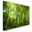 Rich green forest Canvas Art Affordable Wall Print Great Value
