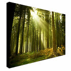 Giant Tree Roots Forest Canvas wall Art prints high quality great value