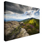 Roan Mountain Appalachian Spring Flowers Canvas Wall Art prints high quality