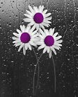 Decorative Daisy Flower Purple Bathroom Bedroom Floral Wall Art Matted Picture