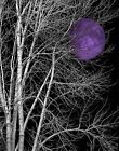 Black White Purple Moon Tree Bedroom Wall Art Matted Picture