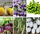 Eggplant Seed- Choose from:White Oblong,Small Round Purple,Round Yellow,Pea etc