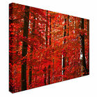Red Autumn  Forest Canvas Art High Quality Great Value