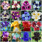 30Pcs Exotic Iris Seeds  Black Red Yellow Blue Purple White Garden Flower Plant cheap