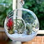 Clear Large Globe GLASS TERRARIUMS Wedding Party Gift Hol...