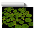 Poster Print Wall Art Lily Pad Pond 2 Landscape Floral Botanical Nature Décor