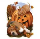 Halloween Shirt, Cat & Dog - Jack O'Lantern - Fall Colors - Small - 5X