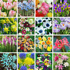 30 Kinds of Flowers Perennial Allium Plant Bulbs Garden Home Decor Variety Seeds