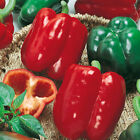 California Wonder Bell Pepper, Variety Sizes, Heirloom, NON-GMO, FREE SHIPPING