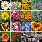 All Perennial Wildflower Mix, 15 Species, Variety Sizes, FREE SHIPPING