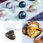 1/5/10PCS individually Wrapped Bulk Akoya Oysters with Large Pearls Round Newest