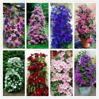 Flower Seeds Climbing Clematis Plant Bonsai Pot Garden Outdoor Courtyard Flowers