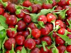 Red Cherry Hot Pepper Seeds, NON-GMO, Heirloom, Variety Sizes, FREE SHIPPING