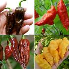 Chocolate Pepper Seeds Vegetables Seeds Courtyard Plants Seeds FF 02