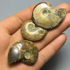 38g Rainbow!!! big Natural conch Ammonite fossil specimens of Madagasca 14