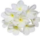 Bunch of 10 PU Real Touch Lifelike Artificial Plumeria Frangipani Flower Without