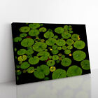 Lily Pad Pond (2) Framed Canvas Print Wall Art Picture Home Décor