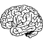 'Human Brain' Rubber Stamp RS019209