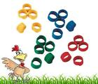 10 X 9mm Pigeon Poultry Chick Spiral Leg Rings Chicken Hen Hatching eggs