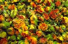 Dried Rose Buds - Gold Tea Rose - Various Quantities