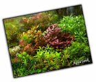 Foreground / Midground Live Aquatic Aquarium Tropical Plants RARE
