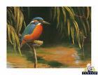 Glass Chopping Board Kingfisher Solo On Water Birds Kitchen Worktop Saver 3 Size