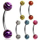 New Surgical Steel Eyebrow Cartilage Curve Barbell Stud with Zebra Tiger Balls