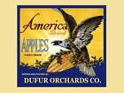 USA US American Eagle Bird Apples Vintage Fruit Crate Label Repro FREE S/H