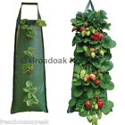 STRONG HANGING FLOWER BAG POUCH Herb Strawberry Planter - UV Treated Fabrics