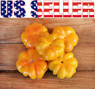 30 ORGANICALLY GROWN Pumpkin-Shaped Hungarian Sweet Pepper Seed Heirloom NON-GMO