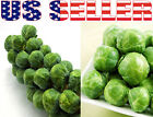 100+ ORGANICALLY GROWN Long Island Improved Brussel Sprouts Seeds Heirloom